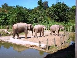 Kota Kinabalu Zoo