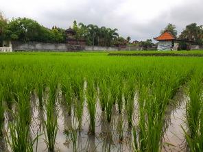 Seminyak Bali Rice Field