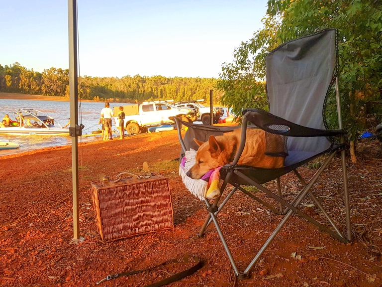 Sleepy Dog at Waroona Dam