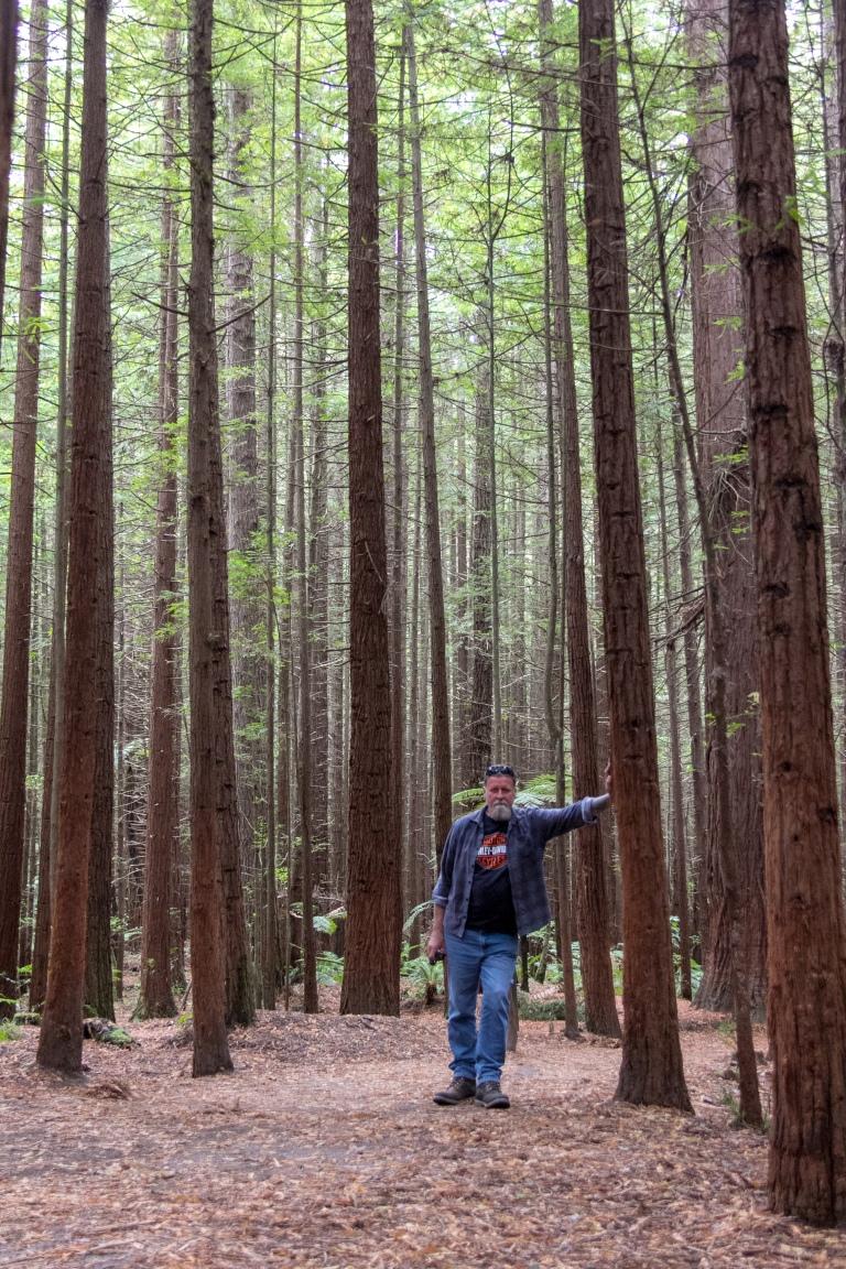 Rotorua Redwoods 10
